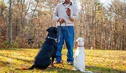 Zeph training 2 dogs